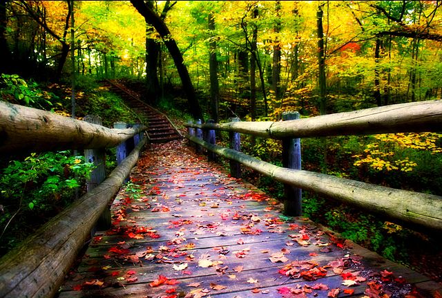 <table class=&quot;lightbox&quot;><tr><td colspan=2 class=&quot;lightbox-title&quot;>Grant Park in Autumn</td></tr><tr><td colspan=2 class=&quot;lightbox-caption&quot;>Fall colors surround a path through a wooded area of Grant Park in 2009.</td></tr><tr><td colspan=2 class=&quot;lightbox-spacer&quot;></td></tr><tr class=&quot;lightbox-detail&quot;><td class=&quot;cell-title&quot;>Source: </td><td class=&quot;cell-value&quot;>From the Wikimedia Commons. Photograph by Indy Kethdy.<br /><a href=&quot;https://commons.wikimedia.org/wiki/File:Grant_park_in_the_fall_-_milwaukee.jpg&quot; target=&quot;_blank&quot;>Wikimedia Commons</a></td></tr><tr class=&quot;filler-row&quot;><td colspan=2>&nbsp;</td></tr></table>