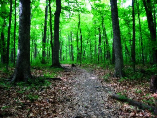 Photograph showcasing a forested path that runs through Greenfield Park.