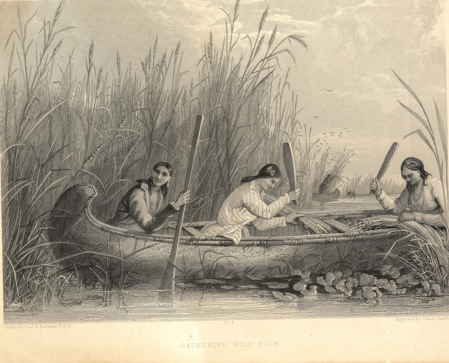 This illustration depicts three Native American women knocking wild rice grains into their canoe with paddles.