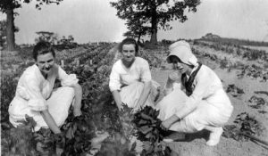 In the spirit of meatless and wheatless days during World War I, a victory garden is tended by students at Wisconsin State Normal School (Milwaukee), now UWM.