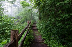 The Schlitz Audubon Nature Center features a variety of walking paths, such as this one.
