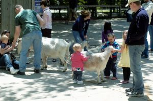 The Milwaukee County Zoo features a number of interactive exhibits for children, including this petting zoo with goats.