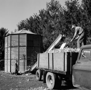 Agriculture remains a key aspect of the economy in Walworth County. In this photograph from the mid-twentieth century, a man loads corn into an elevator.