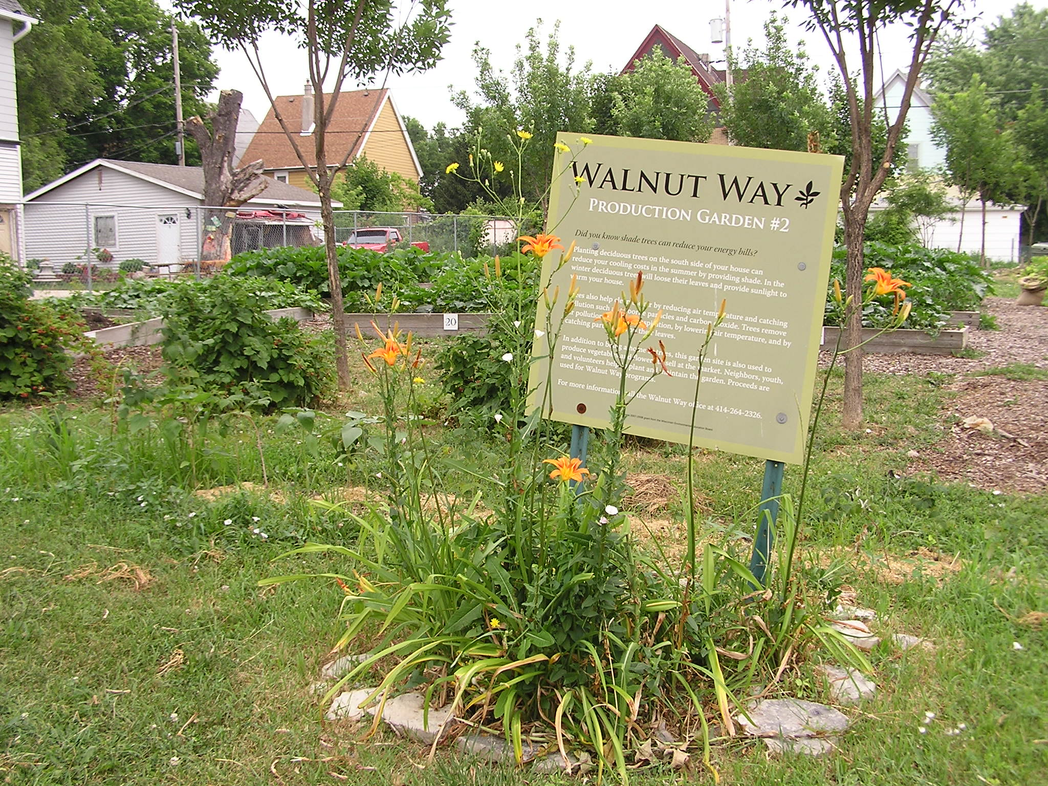 The Walnut Way Conservation Corp. transforms vacant lots into community gardens, many of them cared for by area students.